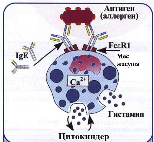Аллерген — любой внешний антиген