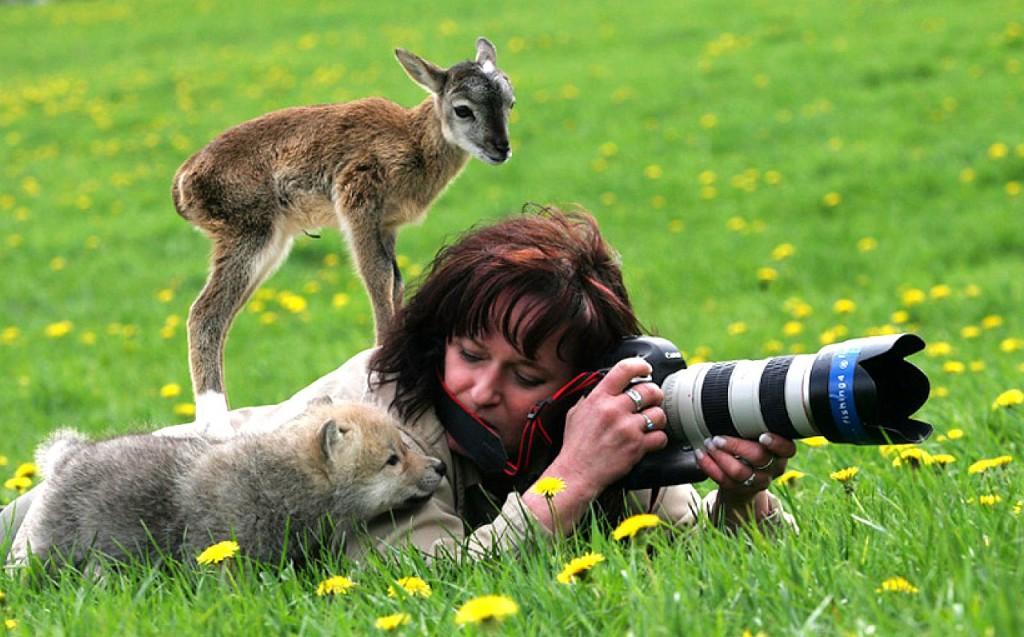 Как фотографировать животных.